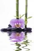 Fotografie Spa conceptual composition with black massage stones, orchid and some bamboo stalks on a white background; with space for text