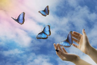 open hands let go of beautiful blue butterflies in the mystical sky
