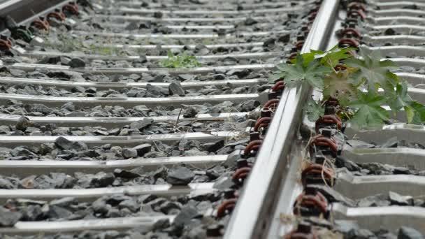Vasúti vagy villamos-egy esős nap pályák