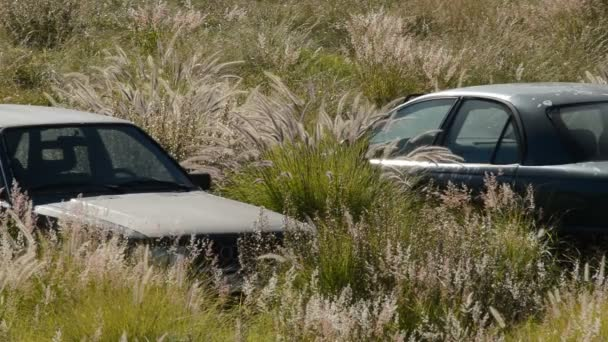 Abandoned cars in a car cemetery