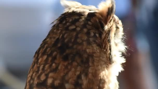 Sova otočí hlavu a dívá se na ptačí výstavu