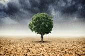 Táj a fák, a változó környezethez, a fogalom az éghajlatváltozás