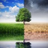 A tájat a fák és a gondolatok a változó környezethez, a fogalom az éghajlatváltozás módosítása