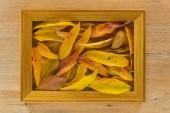 Fotografia Cornice in legno dorato sul bordo di legno con foglie dautunno