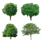 Photo Green tree collection isolated on white backgroun