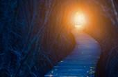 Fotografia Luce alla fine del tunnel albero scuro. Speranza e vita