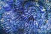 closeup Ammonitský prehistorické fosilních na povrchu kamene