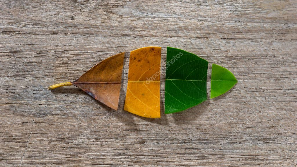Set Autumn Color leaves on wooden background, Leaves of jackfruit.