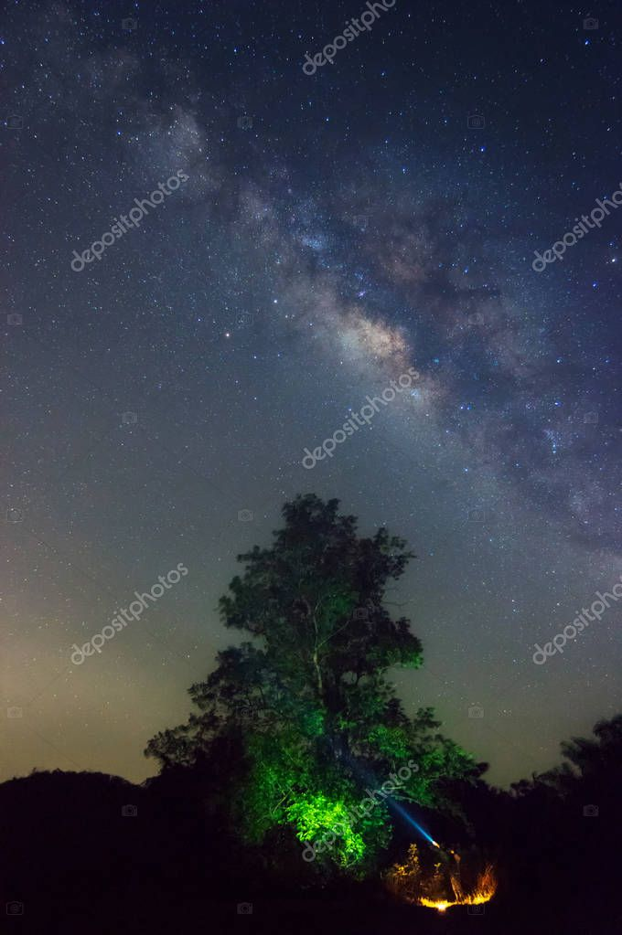 Milky way galaxy with stars and space dust in the universe and Zodiac light on night sky above Kaeng Krachan National Park with Big tree foreground. Phetchaburi, Thailand. Long exposure.