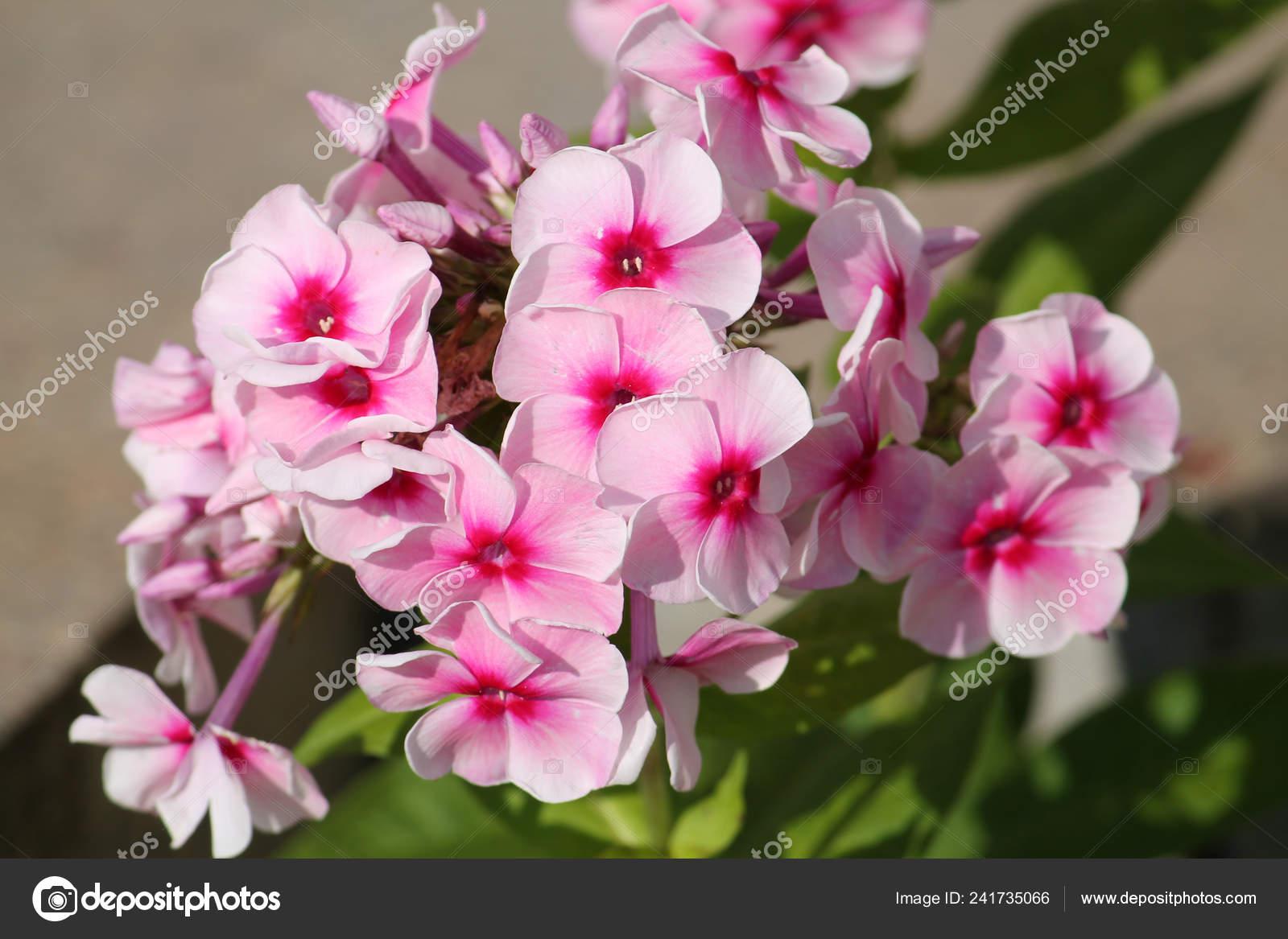 Кнопки ваз 2114 цвет
