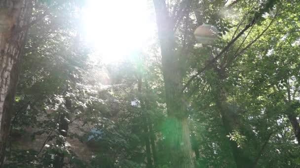 Poplar fluff letí skrz sluneční erupci v zeleném listoví stromů