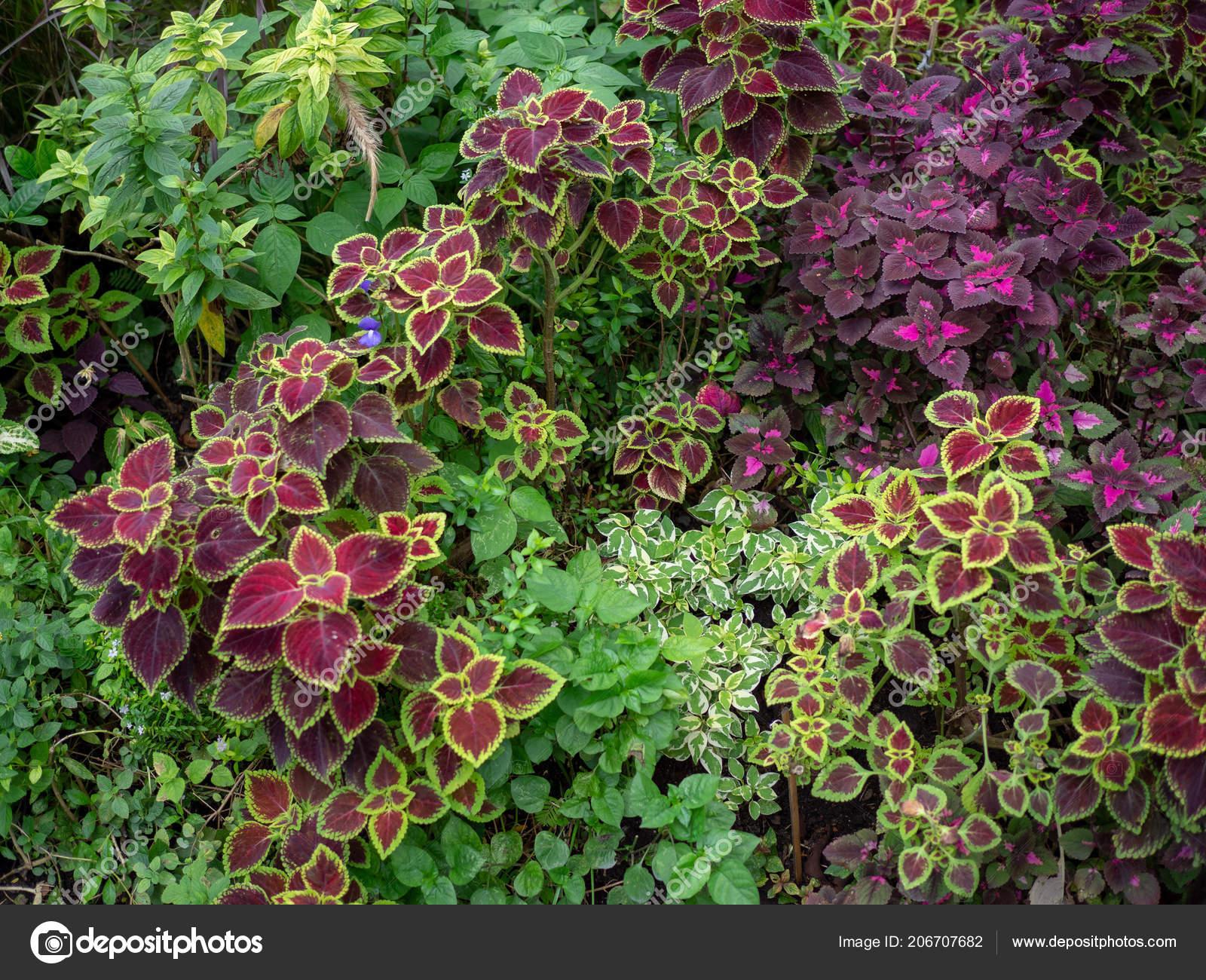 Small Jungle Living Outdoor Tropical Evergreen Garden Plants Root