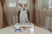 Portrait of smart white mixed-breed dog reading big book at the table