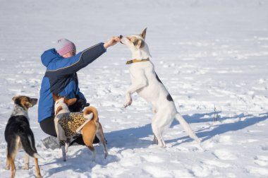 Woman feeding big white dog outdoor while other dogs waiting their turn