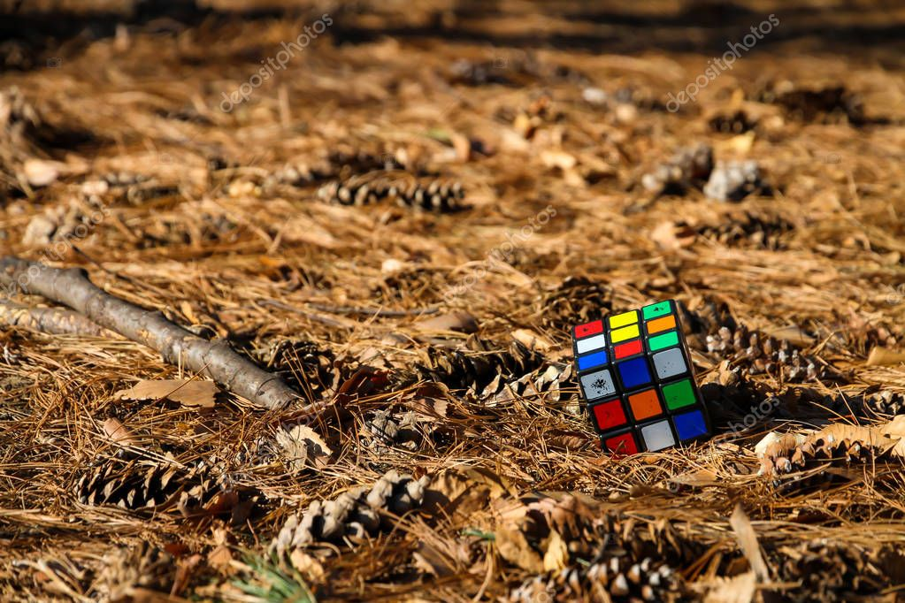 Rubik's Cube is placed on the floor with leaves and flowers of pine trees around.
