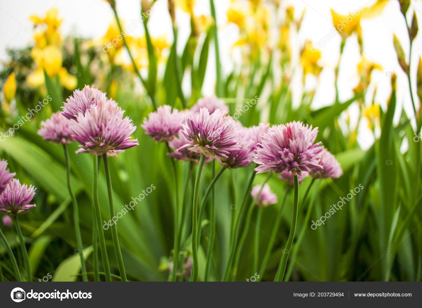 Beautiful Garden Flowers Beauty Clubs Beauty Earth Crust — Stock