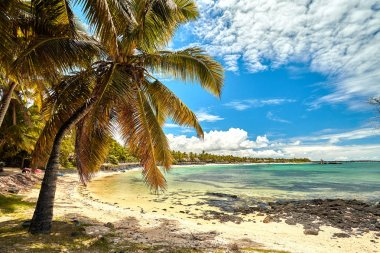 Belle Mare Plage in Mauritius Island, coconut palm tree and white sand