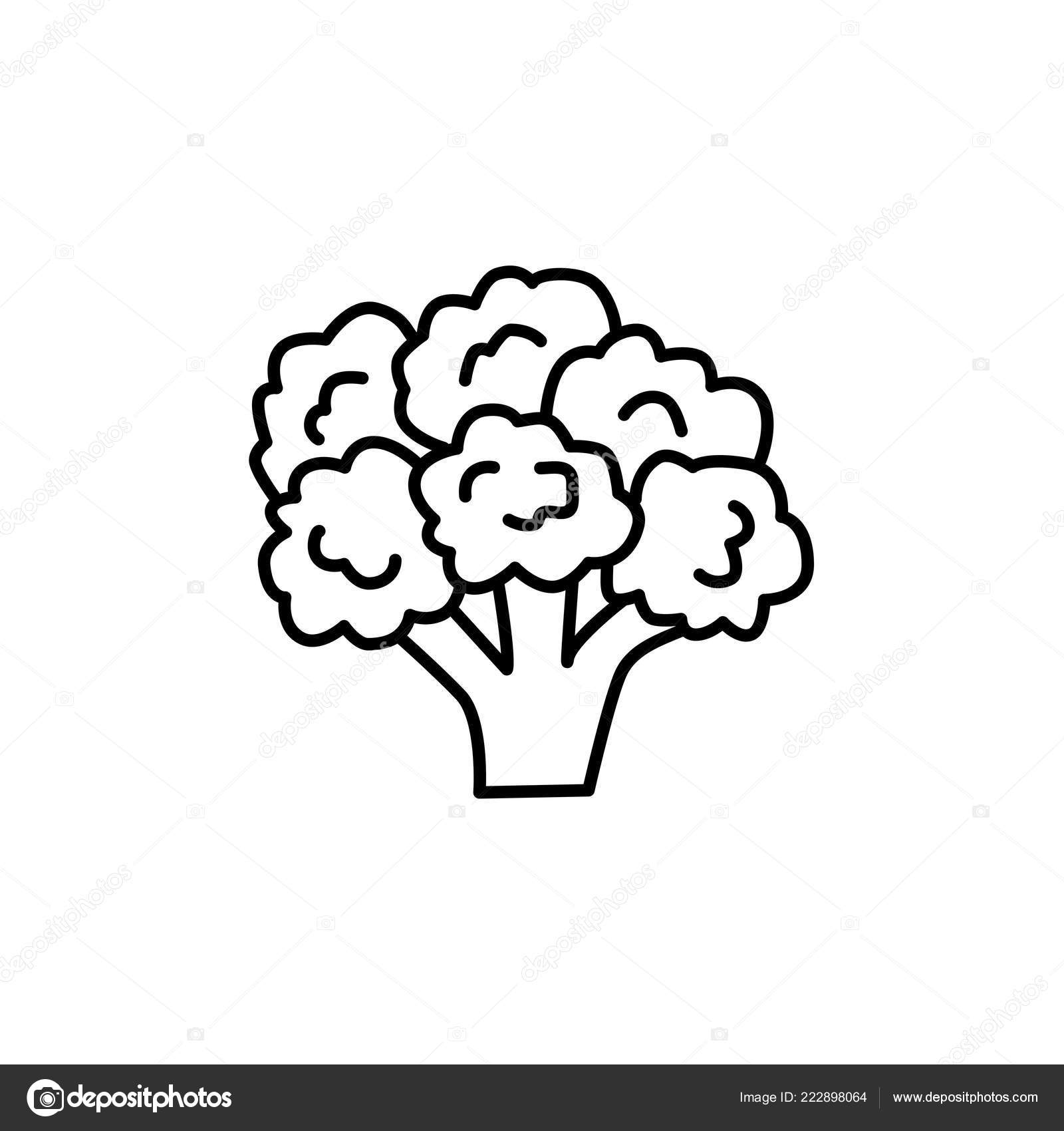 vector vegetable black and white black white vector illustration flowering head broccoli vegetable line icon stock vector c milta 222898064 https depositphotos com 222898064 stock illustration black white vector illustration flowering html