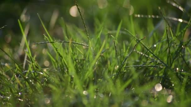 Zelená tráva pod vodou prohazuje sluneční světlo zavřít 4k video