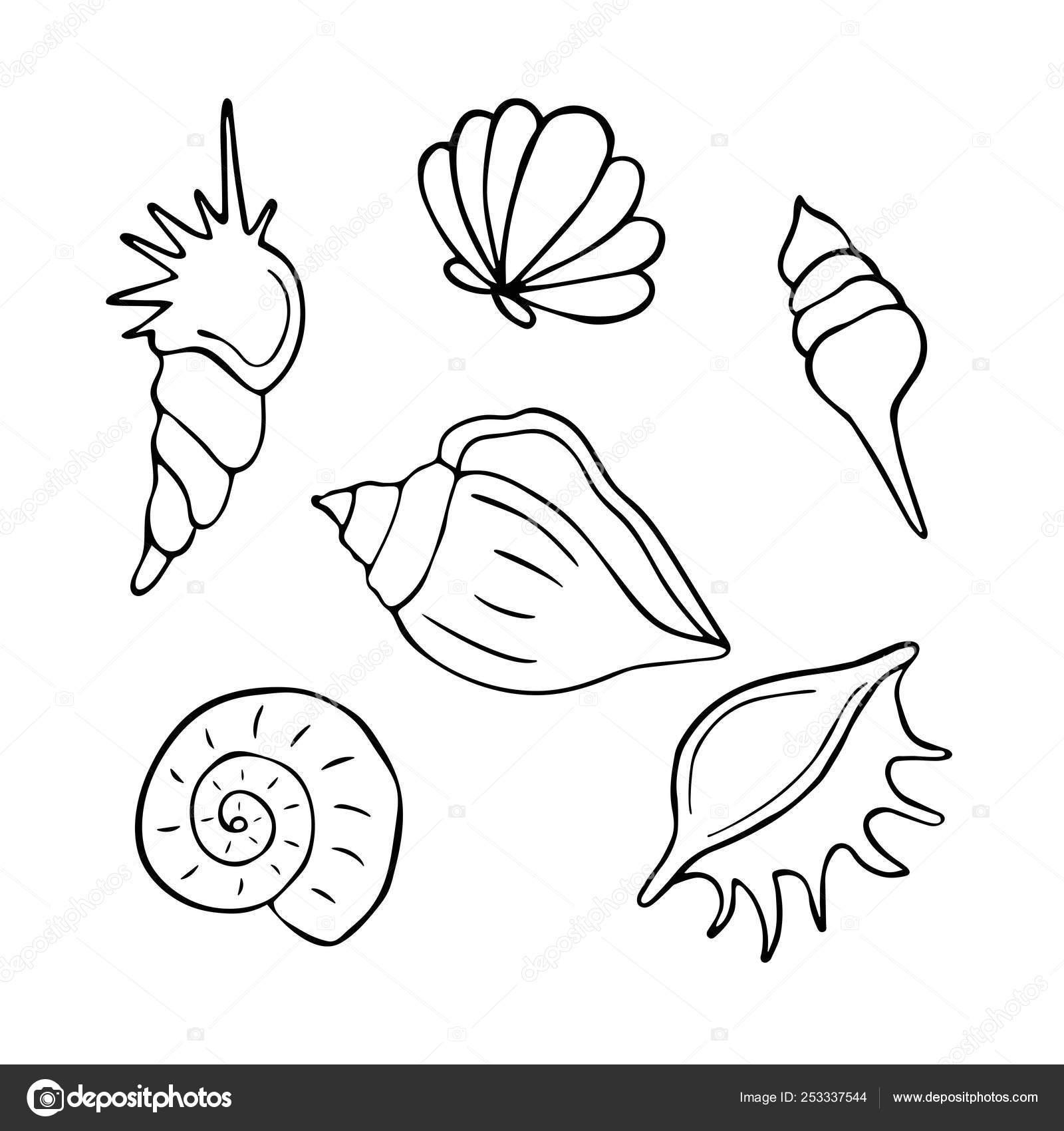 Colección Conchas Mar Dibujado Mano Marina Ilustración Libros Para