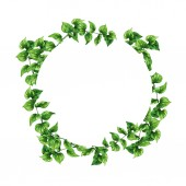 Fotografie Elegance green branches circle isolated on white background. Hand drawn watercolor illustration.