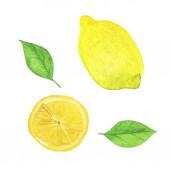 Set of fresh lemon and fruit slices isolated on white background. Hand drawn watercolor illustration