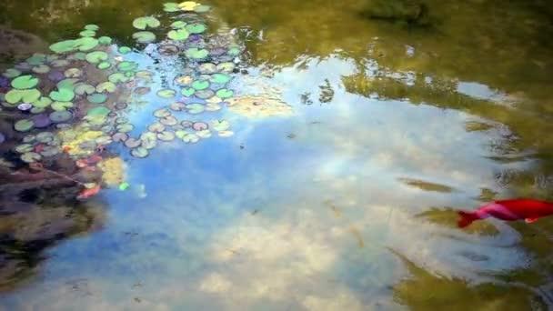 Grüner See und Fische