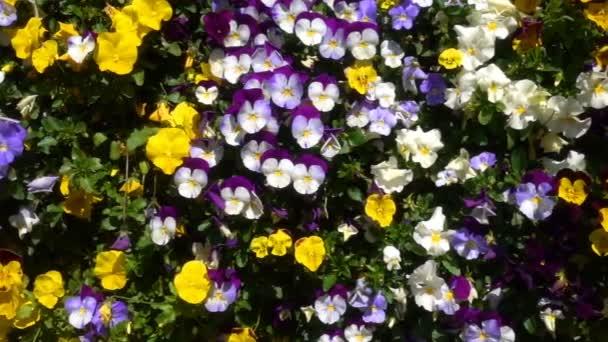 Barevné květy a krásné pozadí