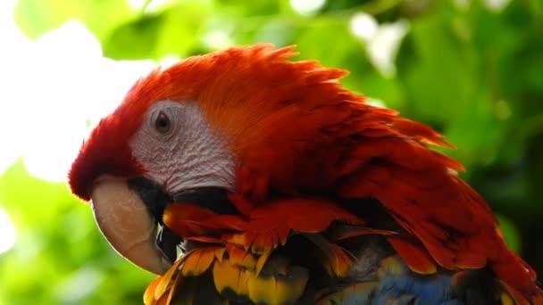 Papoušek ptačí zvíře a krásná barva