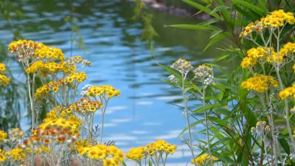 Yellow Flowers and Lake Water in Nature