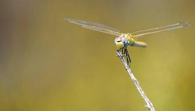 Macro shot of dragon fly