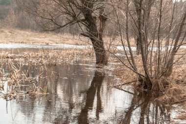 spring flood of the river with reflection of trees