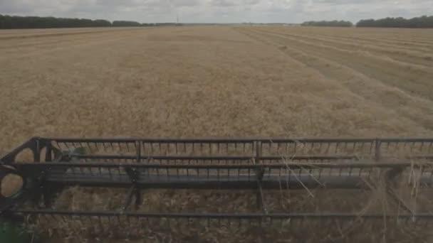 Macchina della mietitrice lavorando nel campo. Mietitrebbia, macchina di agricoltura campo di frumento maturo dorato di raccolta. Agricoltura. Raccolta del grano. Combain raccoglie il raccolto di grano. Raccolta del grano.