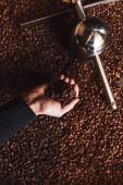 Roasted aromatic coffee beans in a modern coffee roasting machine.