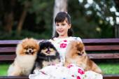 schöne kleine Mädchen sitzt auf Bank im Park mit ihren entzückenden pommerschen Hunden.