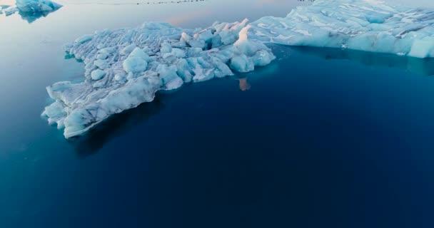 Robben auf der Eisscholle im Luftbild