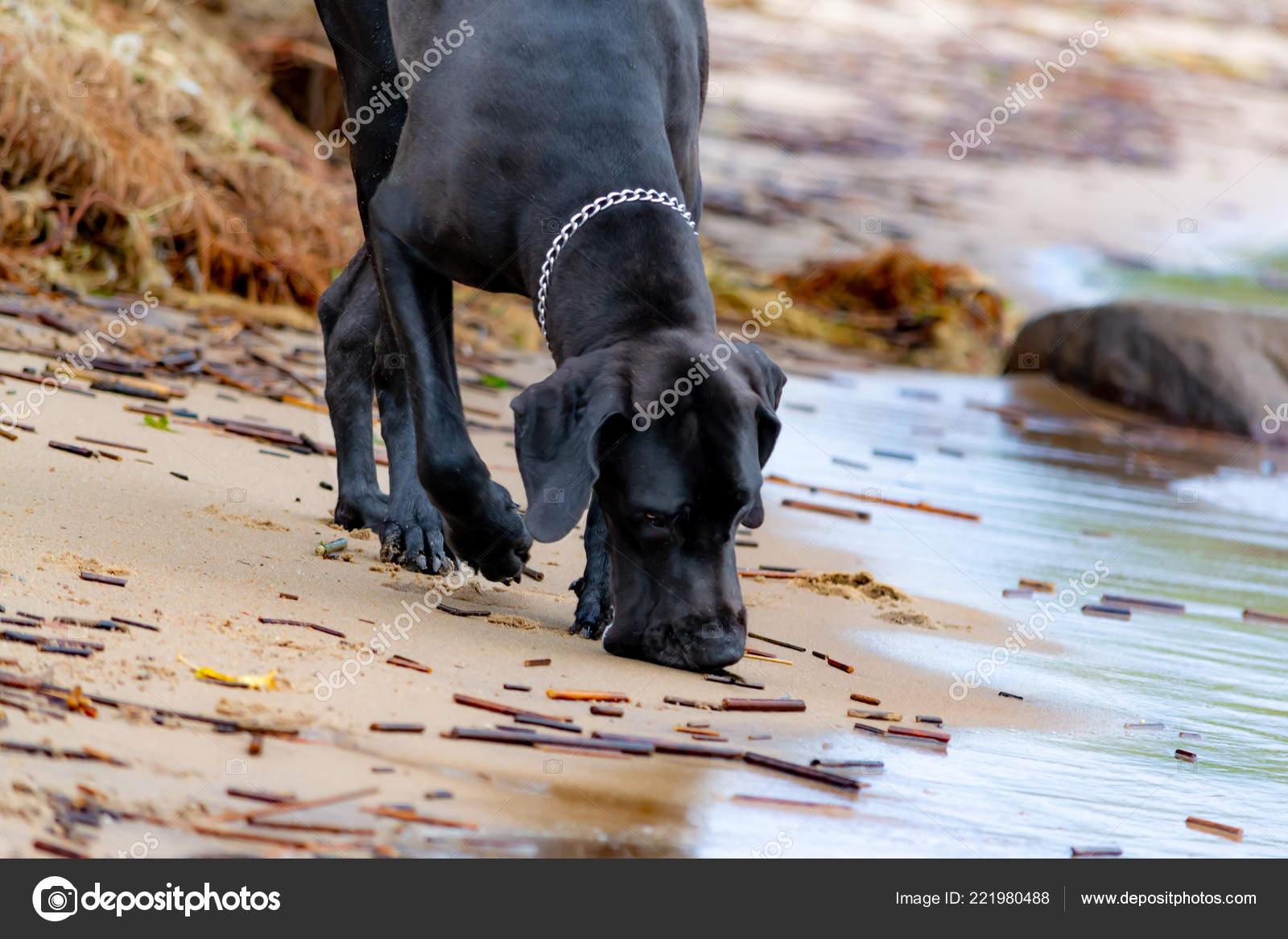 Černá kočička na pláži