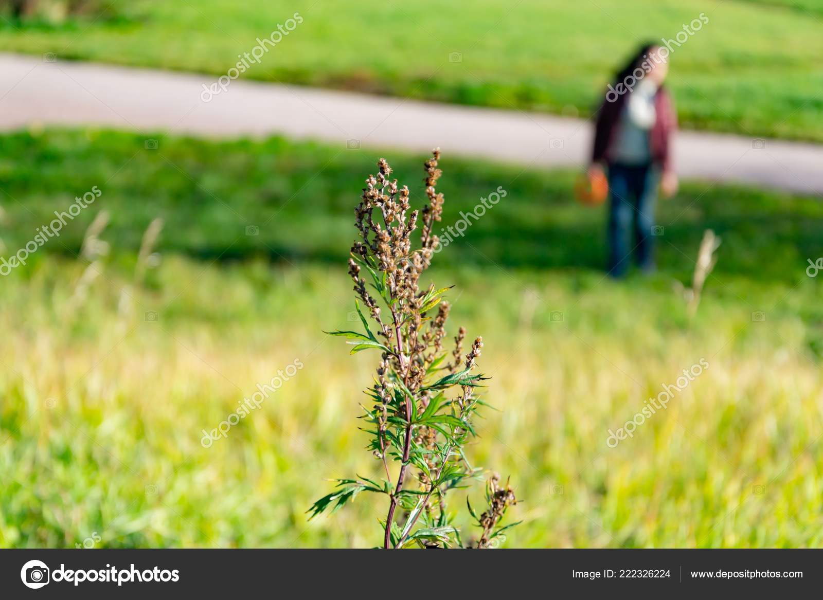 Forenede Stater halv pris lavpris salg Young Girl Resting Green Glade Woman Reading Book Nature ...
