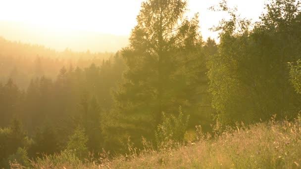 Krajina, západ slunce v horském lese na louce. Stromy a louky a travní tráva osvětlovaly podsvícení slunce. Vyvěšení různých středů, komárů.