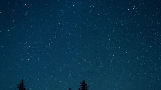 Starry sky in the background of fir trees. Moon rise. Video. UltraHD (4K)