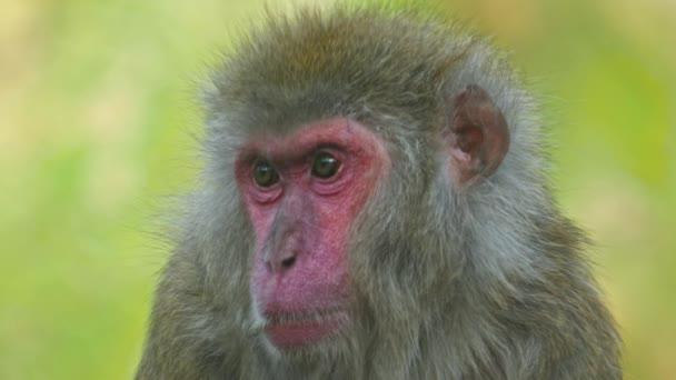 Zavírám opici v 4KU