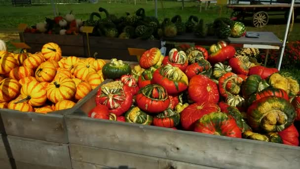 Amish Farm Stand Selling Autumn Plants and Decorations