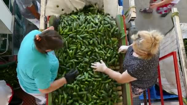 Gospodjinci ; Serbia ; 07/20/2018.Workers in the Production Plant for Packing and Sorting Cucumbers