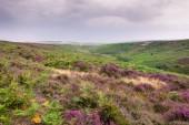 grün und lila, natürliche Landschaft der Moore und Hügel von York