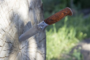 Folding knife stuck in a wooden log, close-up