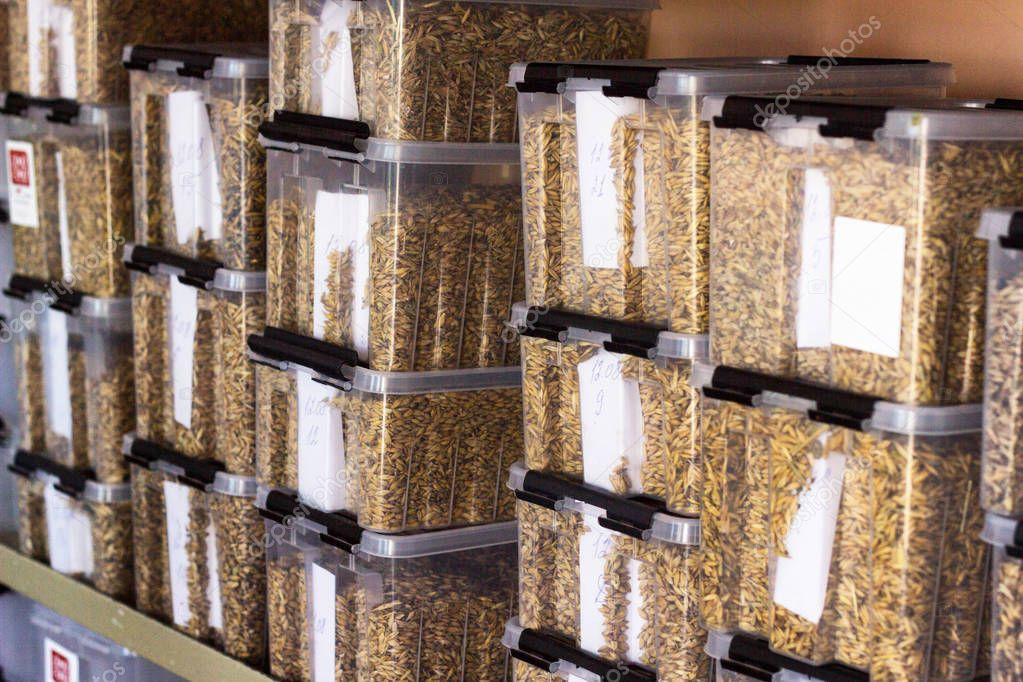 laboratory for the analysis and diagnosis of grain from the field, in plastic containers samples of grain, corn