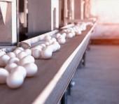 Fényképek Többszintű szállítószalag a csirke tojás csirke farm, sun, szállító, hely másolás