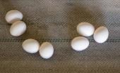 Fényképek Friss csirke tojás a baromfi gazdaságban a szállítószalag, a mozgás, zár-megjelöl, szállító, ipari