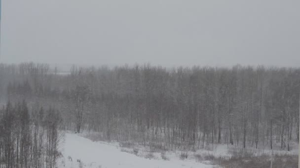 Winter forest on the background of heavy snow, background, cloudy weather