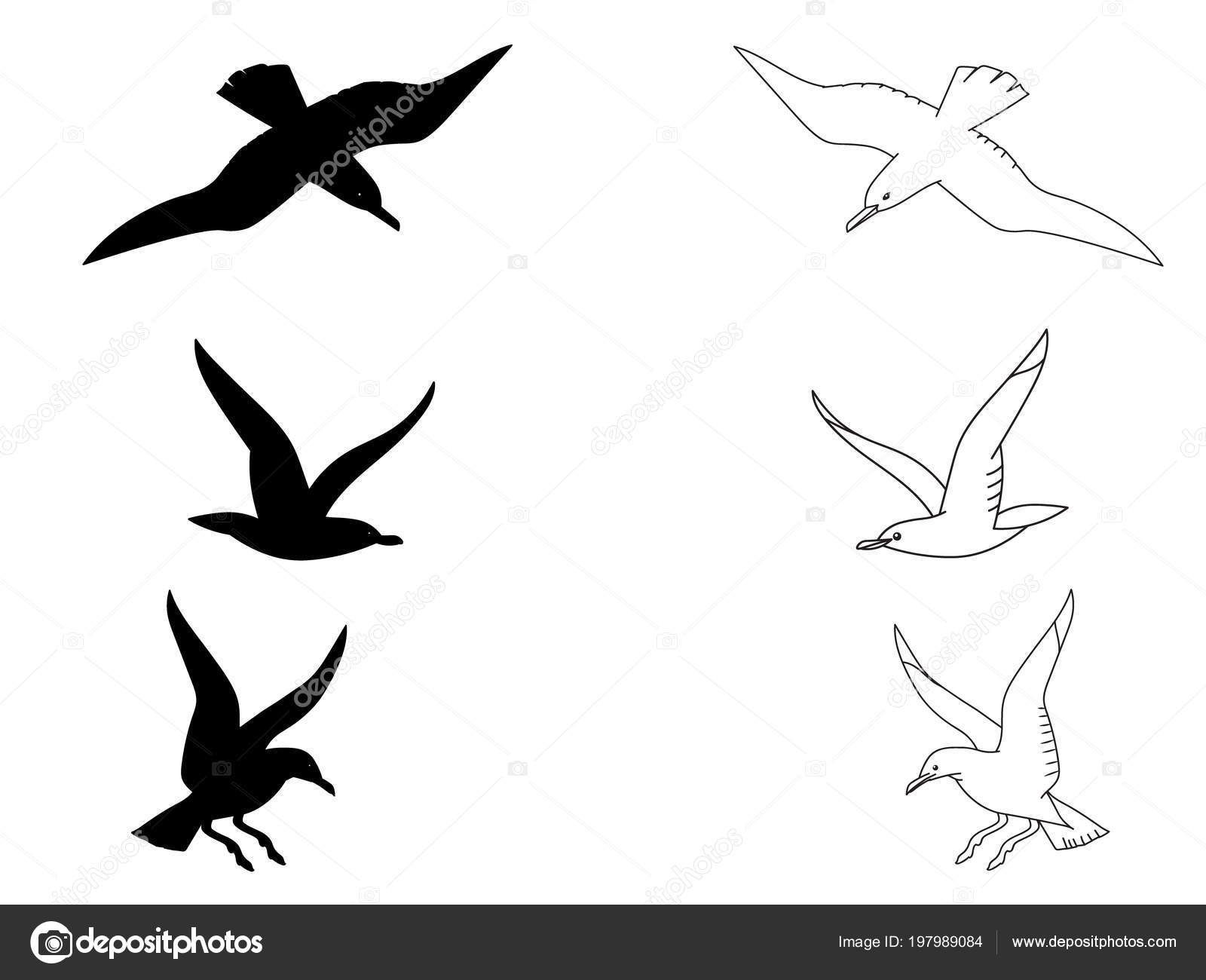 Black Silhouette Outline Seagulls Isolated Birds Coloring Kids Book